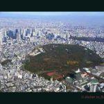 奥のビル群は新宿高層ビル。手前は代々木公園、紅葉が美しい。