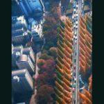 外苑前銀杏並木道は、きれいにオレンジ色のとんがり帽子が並んでいます。