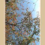 紅葉と青空が心地いい季節。